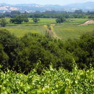 A view of the vineyards of Anderson Valley in Mendocino County, California.