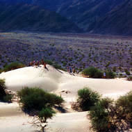 A college geologic field trip at sand dunes in Death Valley National Park.