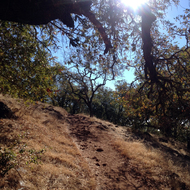 A view up the Sonoma Overlook Trail.