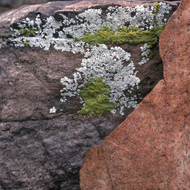 Lichen on sandstone rocks in the Grand Canyon.