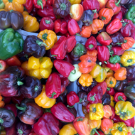 A variety of peppers on display at a farmers market.