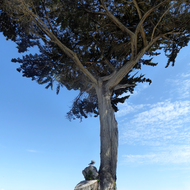A Cypress Tree and a Seagull.