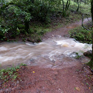 A seasonal creek running across the Sonoma Overlook Trail in a rainstorm.