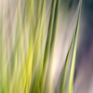 Agave Abstract 2