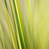 Agave Abstract 3