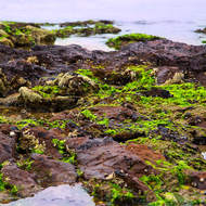 Tidal shallows with algae and sea snails.