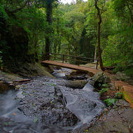 Walking track through the rainforest, along Saddle-tree creek.