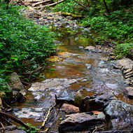 A rainforest stream with a field of debris from the last flood event.