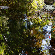 Reflections in Bat Cave Creek.