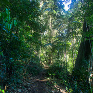 Early morning on the foot track to the summit of Mount Warning.