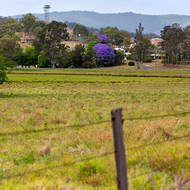 Jacaranda tree on the outskirts of the village of Rathdowney, and the town water supply on the hill.