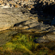 Tide pool and reflections of Pandanus Pines and blue sky.