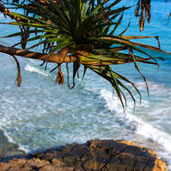 Branch of a Pandanus Pine overlooks the sea and rocks.