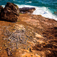 An assembly of sticks like a collection of bones, on Blowhole point.