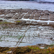 Well-worn and not so worn sections of the Tessellated Pavement.