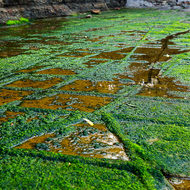 Algal growth makes walking slippery on the Tessellated Pavement.