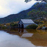 Tasmanian snowgum stands in the clear water of Dove Lake beside the old boatshed.