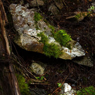 Moss growing on a quartz rich granite rock.