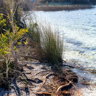 Shooting into the sun along the sandy and grassed shore of Lake McKenzie.