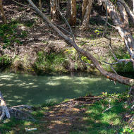 Eli Creek flows cleanly and swiftly through the paperbark trees towards to sea.