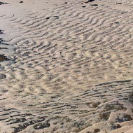 Textures of rippled sand.