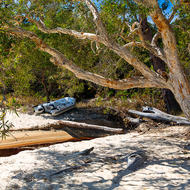 Beach scene of paperbark tree, creek and RIB.