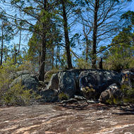 Dry forest granite landform and trees.