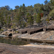 A 270 degree panorama of the confluence of Bald Rock and Ramsay Creeks.
