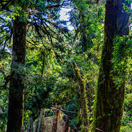 Fence in a mossy gondwana land forest.