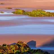 Sunrise hits algae on rocks at low tide