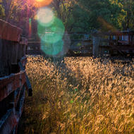 Setting sun flares through trees and over cattle yard grasses.