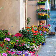 Flowering plants for sale in the Piazza.