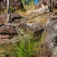 Pleasant forest walk amid boulders and grasses.